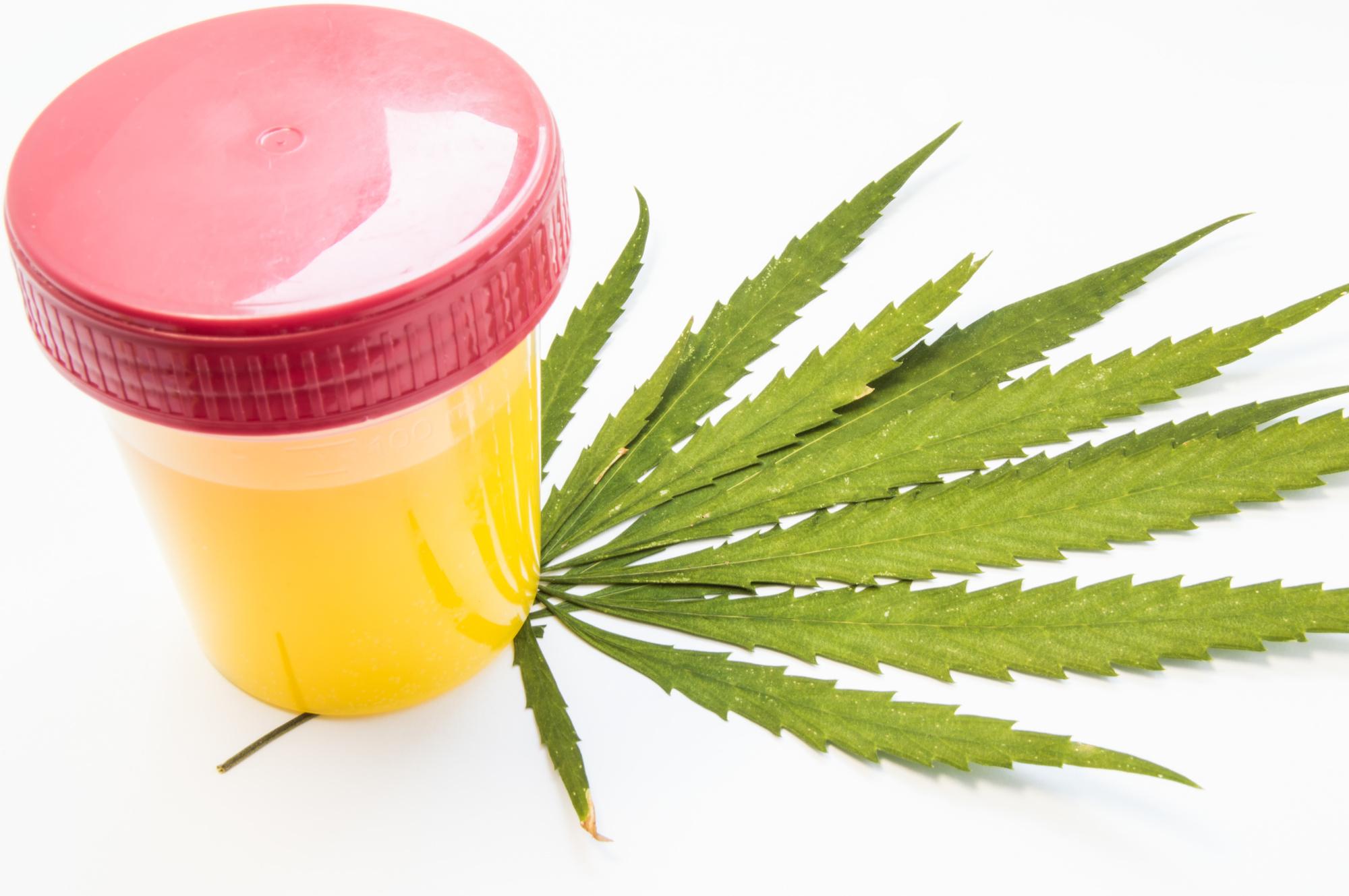 marijuana and drug test